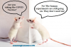 vaccine-COVID-Mice-Cartoon-1.png
